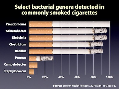 **Pathogenic bacteria found in commonly smoked cigarettes** – Microbes may play a greater role in the pathogenesis of diseases caused by smoking tobacco than previously thought.