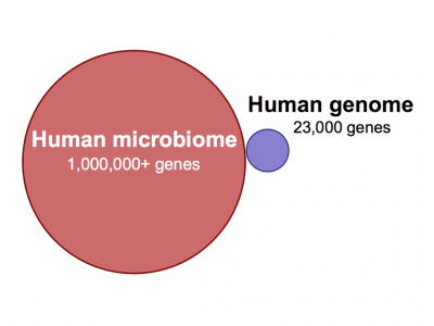 Microbes in the human body (MPKB)