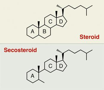 steroids four carbon rings