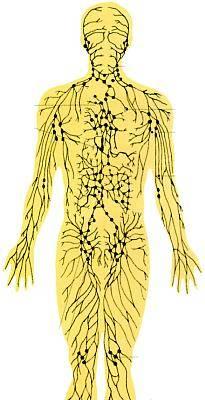 Swollen lymph glands (MPKB)